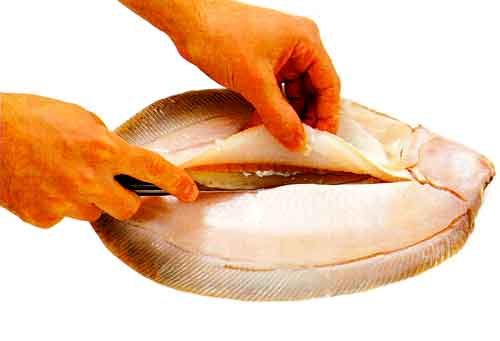 How to Fillet a Flatfish-tips-How to Fillet a Fish step 5