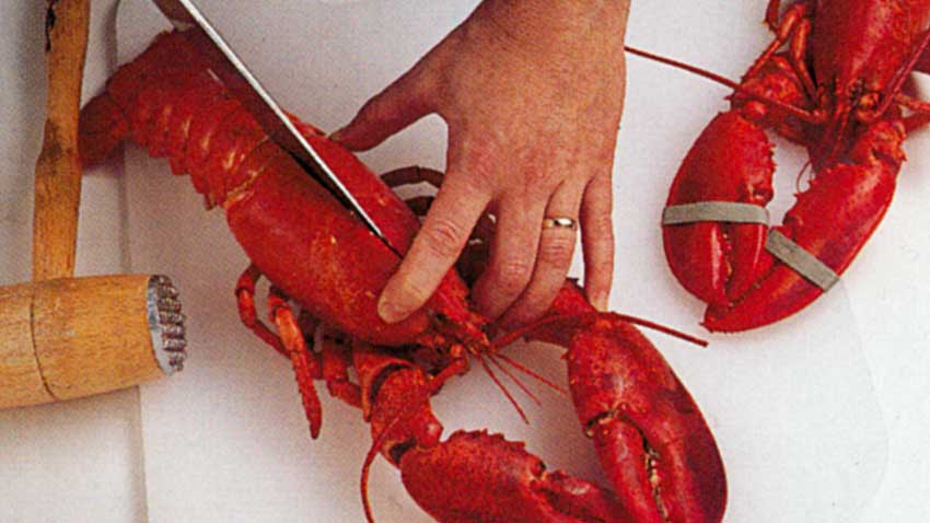 How to Prepare Cooked Lobster-Spread -Clean-Crack-Serve