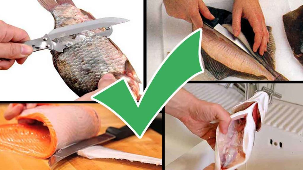 How to Scale, Gut, Fillet and Skin Fish-tips-How to Clean Fish-step by step