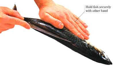 How-to-Fillet-a-Round-Fish-step-by-step-with-photo-Set-the-fish-on-the-work-surface