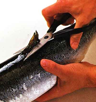 How-to-Trim-a-Fish-Turn-the-fish-over-and-cut