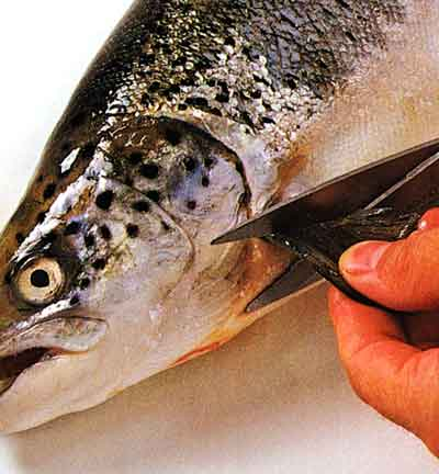 How-to-Trim-a-Fish-step-by-step-1